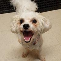 Adopt A Pet :: Tito - Frankfort, IL
