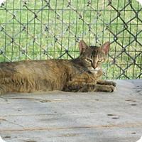 Adopt A Pet :: Sasha - Mexia, TX