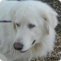 Adopt A Pet :: TEDDY - Granite Bay, CA