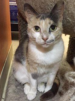 Adopt A Pet :: Harper  - Blasdell, NY