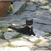 Adopt A Pet :: Aiden - Newtown, CT