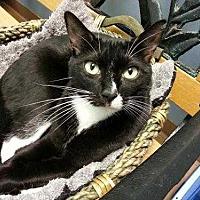 Adopt A Pet :: Marc - Margate, FL