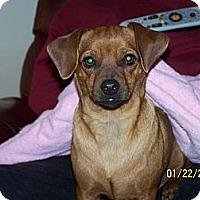 Adopt A Pet :: Wilhelm - York, SC