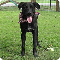 Adopt A Pet :: George - Spring, TX
