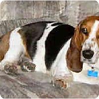 Adopt A Pet :: Pudgy - Phoenix, AZ