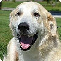 Adopt A Pet :: Avis - Foster, RI