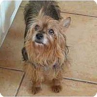 Adopt A Pet :: Adonis - West Palm Beach, FL