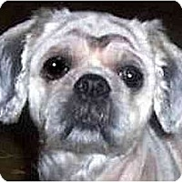 Adopt A Pet :: Samantha - Mays Landing, NJ