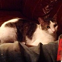 Adopt A Pet :: Brent - Zolfo Springs, FL