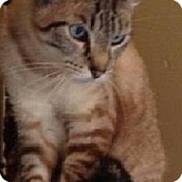 Adopt A Pet :: Chlose - Andover, KS