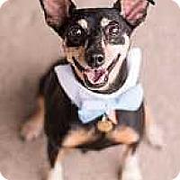Adopt A Pet :: Turbo - Syracuse, NY