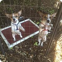 Adopt A Pet :: Tango - Fair Oaks Ranch, TX