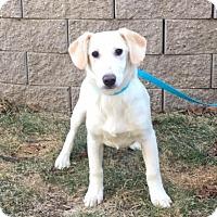 Adopt A Pet :: Jenna is in Rhode Island! - Brattleboro, VT
