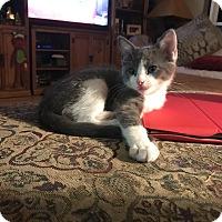 Adopt A Pet :: Echo - Loveland, CO