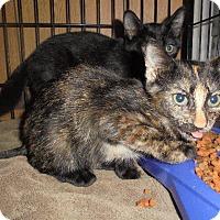 Adopt A Pet :: Kelsie - Springfield, TN