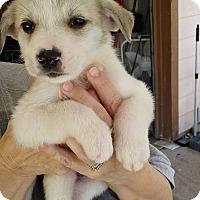 Adopt A Pet :: Jo - Kyle, TX