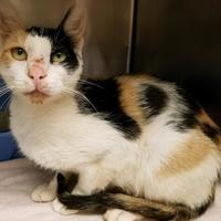 Adopt A Pet :: Calia - Bishop, GA