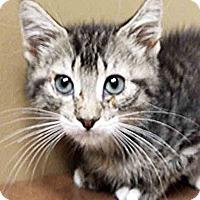 Adopt A Pet :: Katie - Oswego, IL