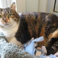Adopt A Pet :: Frisky - Menomonie, WI