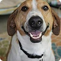 Adopt A Pet :: Penny - Wytheville, VA