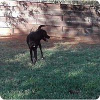 Adopt A Pet :: Sara in OK - Oklahoma City, OK
