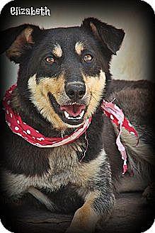Shepherd (Unknown Type) Mix Dog for adoption in Brattleboro, Vermont - Elizabeth
