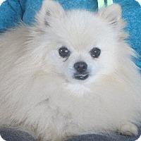 Adopt A Pet :: Gordon - Salem, NH