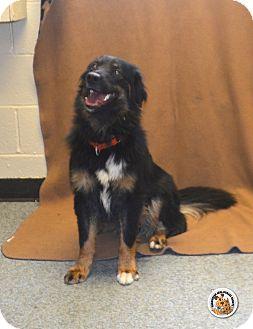 Border Collie Mix Dog for adoption in Eighty Four, Pennsylvania - Ruckus