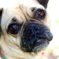 Adopt A Pet :: Noel - Pismo Beach, CA