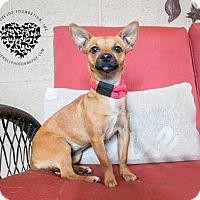 Adopt A Pet :: Roo - Inglewood, CA