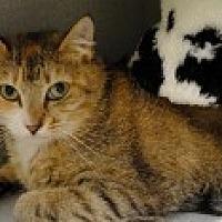 Adopt A Pet :: Acacia - Marietta, GA