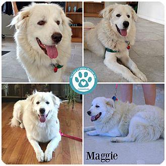Great Pyrenees Mix Dog for adoption in Kimberton, Pennsylvania - Maggie