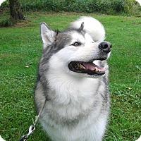 Adopt A Pet :: Lady Shadow - Augusta County, VA