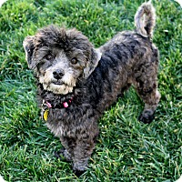 Adopt A Pet :: Katie (and Tobie) - Yorba Linda, CA