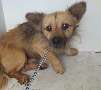 Terrier (Unknown Type, Small) Mix Dog for adoption in Fresno CA, California - Laddie