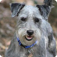 Adopt A Pet :: Wicker - Spring, TX