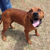 Adopt A Pet :: Percy - Larned, KS