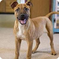 Adopt A Pet :: Tess-pending - Glastonbury, CT