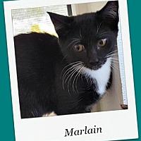 Adopt A Pet :: Marlain - Tombstone, AZ