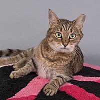 Adopt A Pet :: Diane - Wilmington, DE