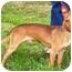 Photo 1 - Miniature Pinscher Mix Dog for adoption in Osseo, Minnesota - Peanut