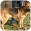 Photo 1 - German Shepherd Dog Dog for adoption in Nesbit, Mississippi - Sheena