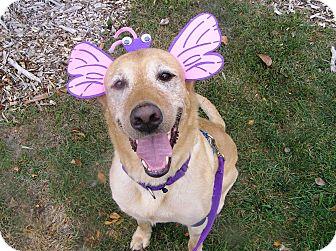 Labrador Retriever Mix Dog for adoption in Oshkosh, Wisconsin - Kayla