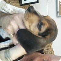 Adopt A Pet :: Darcy - Gadsden, AL