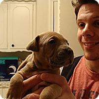 Adopt A Pet :: Un- named Puppy - Owasso, OK