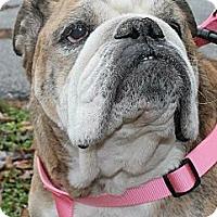 Adopt A Pet :: Mia - Winder, GA
