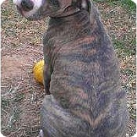 Adopt A Pet :: KDee - DFW, TX