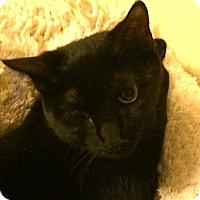 Adopt A Pet :: Maxine - Jersey City, NJ