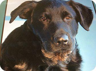 German Shepherd Dog/Rottweiler Mix Puppy for adoption in Los Angeles, California - LENNY VON COLBERT