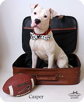 American Pit Bull Terrier Mix Dog for adoption in Luling, Louisiana - Casper